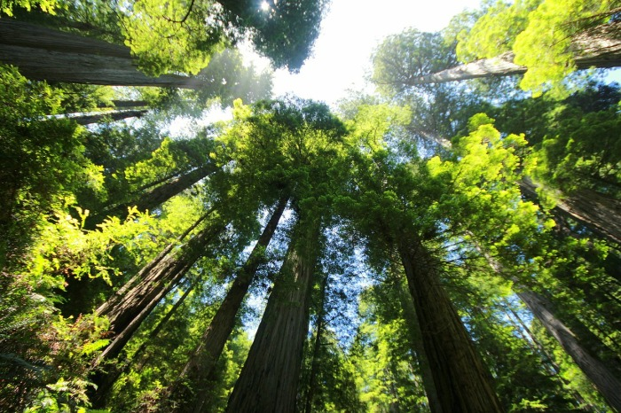 sequoia-274158_1280.jpg