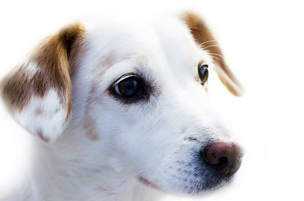 dog-72333_640.jpg