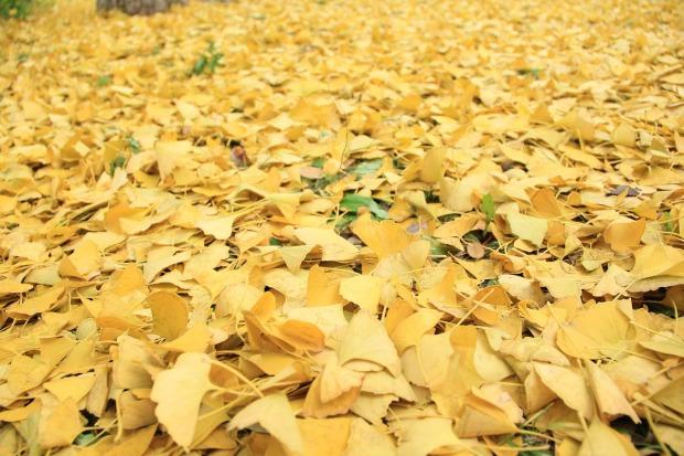 golden-yellow-2386328_1280