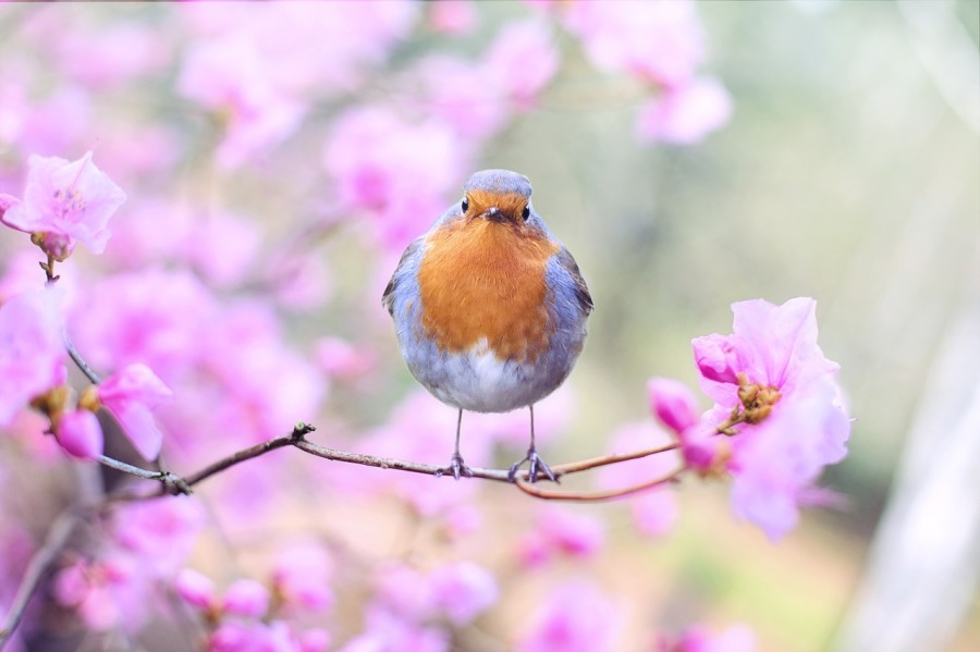 spring-bird-2295436_1280