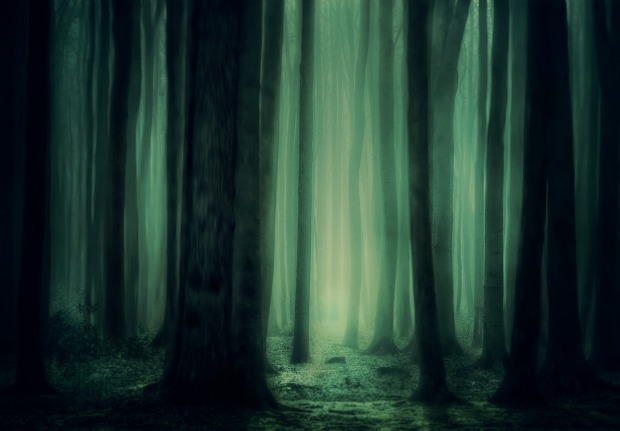 forest-3877365_1280